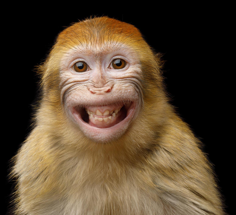 Un singe qui fait un grand sourire