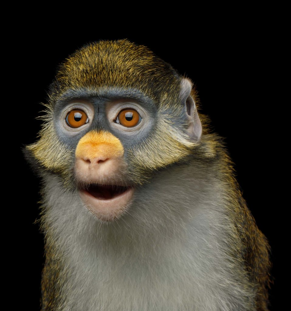 Un singe émerveillé